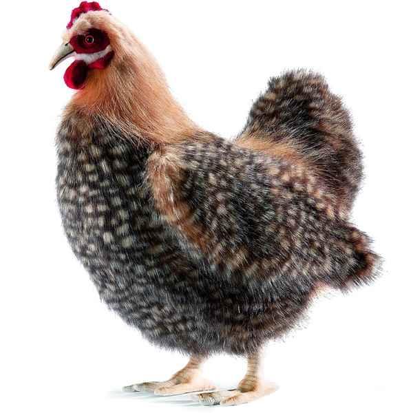 Animal en peluche peluche doudou poule