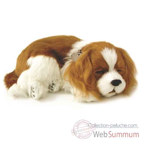 Cavalier king charles Perfect Petzzz -65405