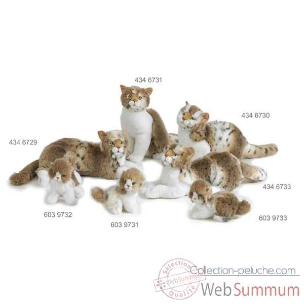 Chat europeen couche 60 cm Ramat -4346733